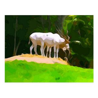 Addax from Safari Postcard