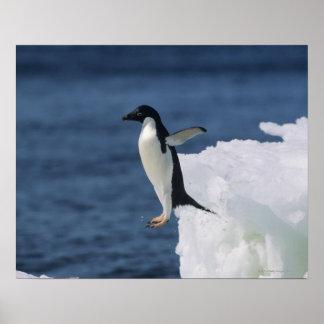 Adelie penguin leaping from iceberg poster