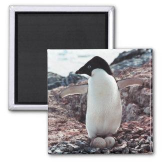 Adelie Penguin Nest Magnet