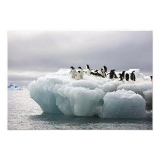 Adelie Penguin Pygoscelis adeliae), Photo Art