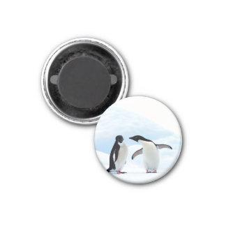 Adelie Penguins 3 Cm Round Magnet
