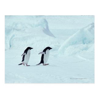 Adelie Penguins, Antarctica Postcard