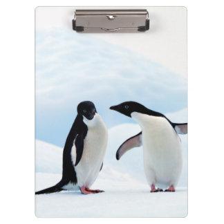 Adelie Penguins Clipboard