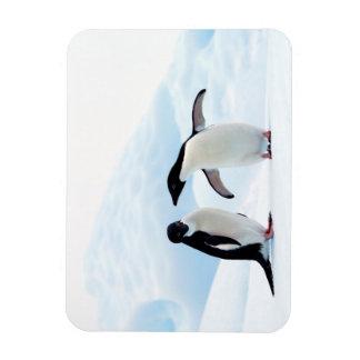 Adelie Penguins Rectangular Photo Magnet