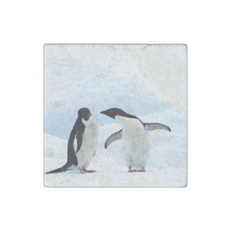 Adelie Penguins Stone Magnet