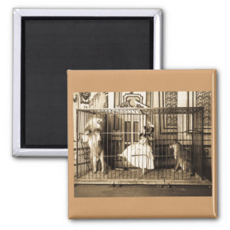 Adgie and Her Trained Lions1897 Square Magnet