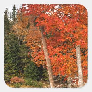 Adirondack Autumn Square Sticker