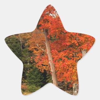 Adirondack Autumn Star Sticker