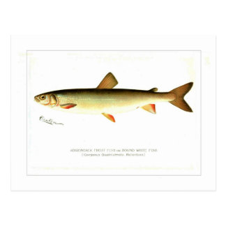 Adirondack Frost Fish Postcard
