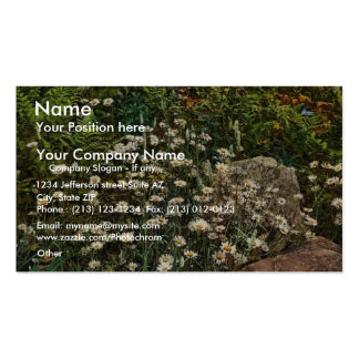 Adirondack mountain wild flowers rare Photochrom Pack Of Standard Business Cards
