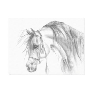 Admirable Arabian Canvas Print