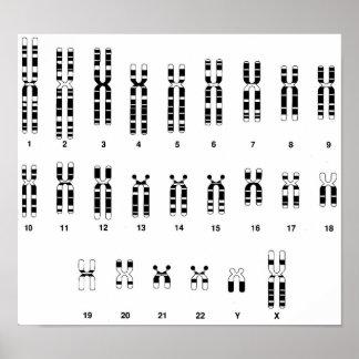 ADN humano Poster