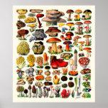 Adolphe Millot ~ Fungi Poster