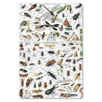 Adolphe Millot's Insectes Tissue Paper