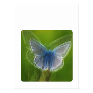 Adonis Blue Butterfly Blurred Postcard