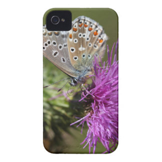 Adonis blue butterfly (Polyommatus bellargus) Case-Mate iPhone 4 Cases