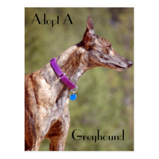 Adopt A Greyhound Postcard