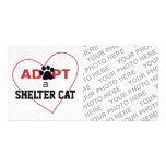 Adopt a Shelter Cat Photo Card