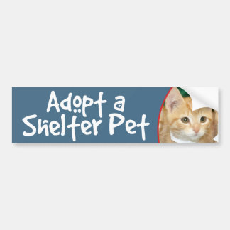 Adopt a Shelter Pet Orange Tabby Kitten Bumper Sticker