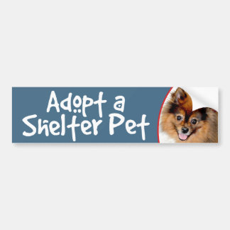 Adopt a Shelter Pet Pomeranian Bumper Sticker
