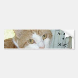 Adopt a stray bumper sticker