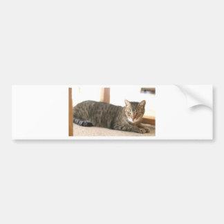 ADOPT Chevy Bumper Sticker