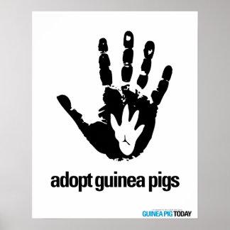 Adopt Guinea Pigs Poster - Guinea Pig Today
