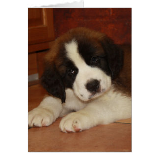 Adorable and Sweet St. Bernard Puppy Greeting Card