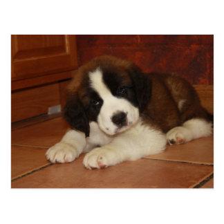 Adorable and Sweet St. Bernard Puppy Postcard