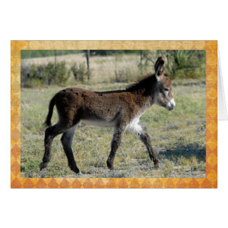 Adorable baby burro congratulations card. card