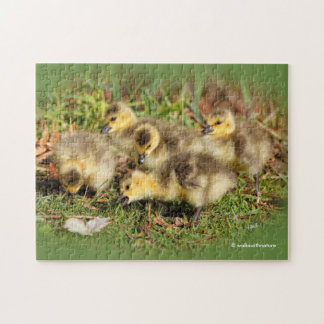 Adorable Baby Canada Geese on the Grass Jigsaw Puzzle