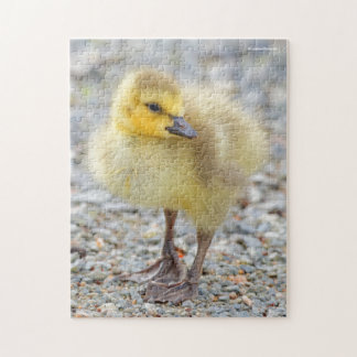Adorable Baby Canada Goose on the Gravel Jigsaw Puzzle