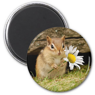 Adorable Baby Chipmunk with Daisy 6 Cm Round Magnet