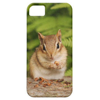 Adorable Baby Chipmunk with Snack iPhone 5 Case