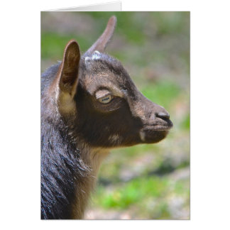 Adorable baby Goat Card