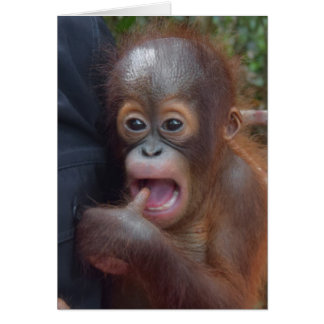 Adorable Baby Orangutan Sucks Thumb Card