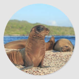Adorable baby sea lion Galapagos Islands Classic Round Sticker