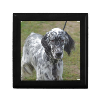Adorable Black and White English Setter Gift Box