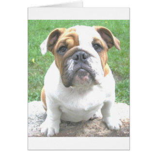 adorable bulldog puppy card