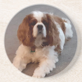 Adorable Cavalier King Charles Spaniel Coasters