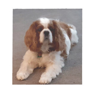 Adorable Cavalier King Charles Spaniel Notepad