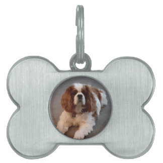 Adorable Cavalier King Charles Spaniel Pet Tag