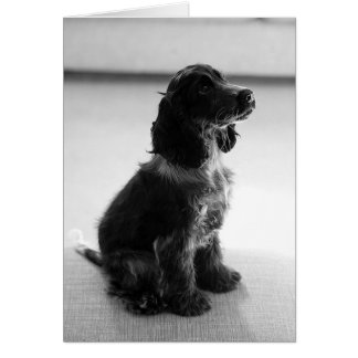 Adorable Cocker Spaniel Greetings Card