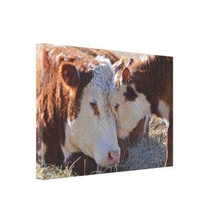 Adorable Cuddly Cows Canvas Print