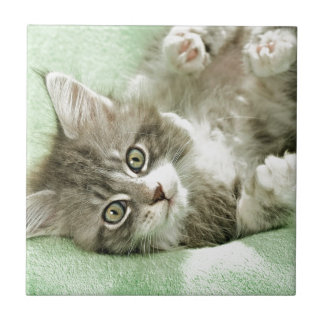 Adorable Cute Grey Tabby Kitten Paw Play Tapping Small Square Tile