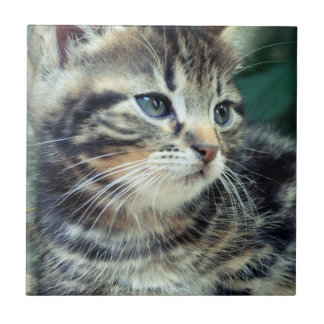 Adorable Cute Kitten Small Square Tile