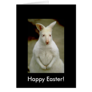 Adorable Cute White Albino Kangaroo Card