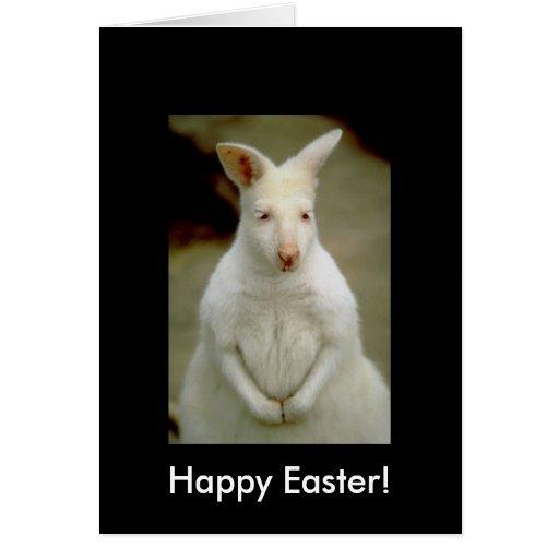 Adorable Cute White Albino Kangaroo Cards