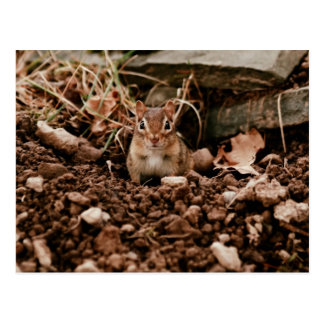 Adorable Digger Chipmunk Postcard