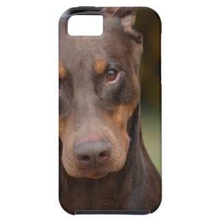 Adorable Doberman Pinscher iPhone 5 Cases